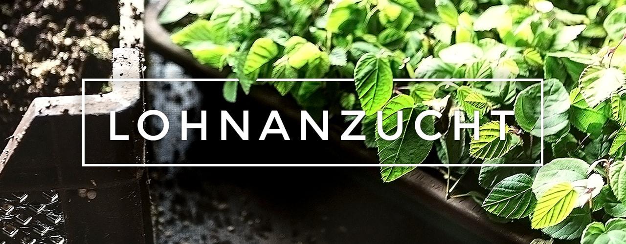 Bunk Pflanzen - Lohnanzucht